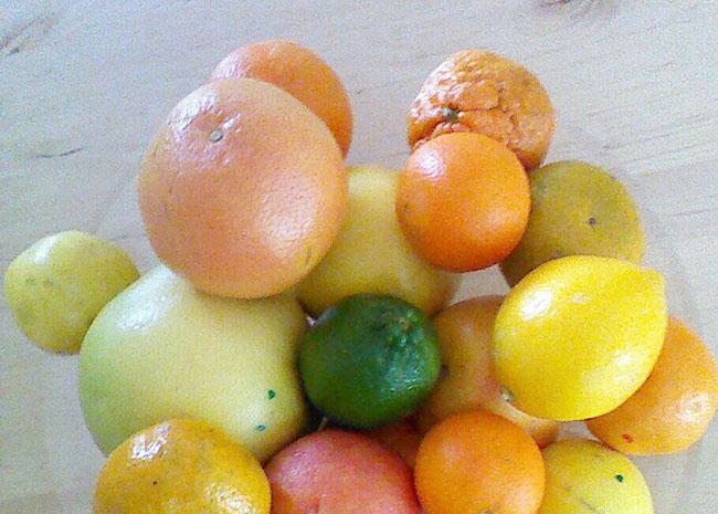 citrus 650